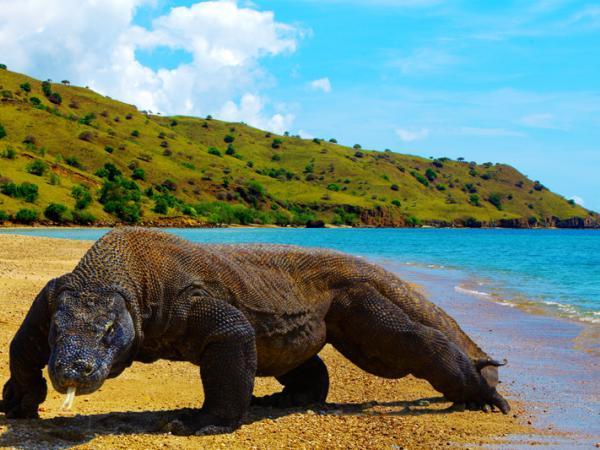 Berlibur ke Pulau Komodo