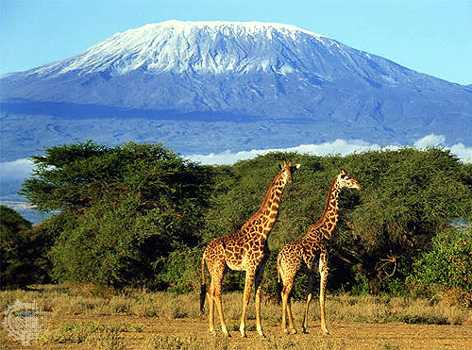 Kilimanjaro | New7Wonders of Nature