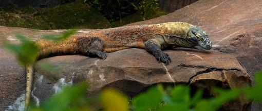 Komodo | New 7 Wonders Of Nature